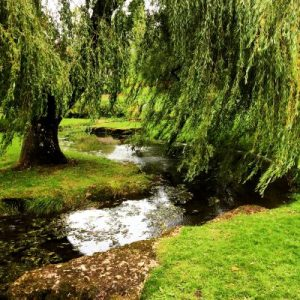 Cardiffer Parkromantik