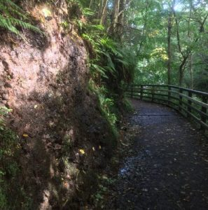 Wandern im Glenariff Forest Park