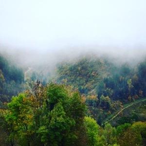 Wenn man vor lauter Nebel den Wald kaum sieht...
